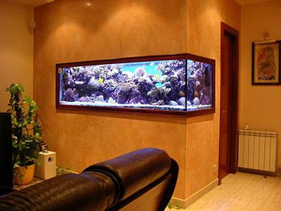 conception fabrication d coration et entretien d aquarium vente de poissons d eau douce et d. Black Bedroom Furniture Sets. Home Design Ideas